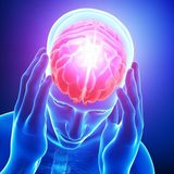 podpora činnosti mozgu