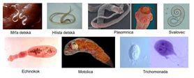 Parazity v našom tele