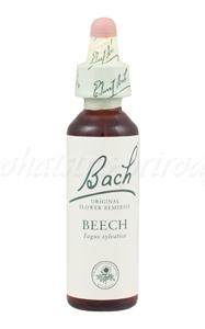 Beech - Buk lesný - bachove kvapky