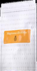 Maytenus Ilicifolia Energy