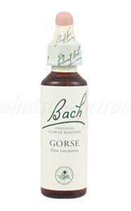 Gorse - Útesovec európsky 20 ml - bachove kvapky